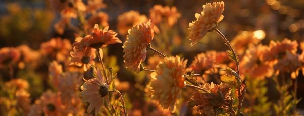 Herbst am Gardasee